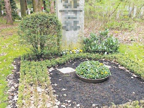 buchsbaum sterben auf den friedh fen stadt. Black Bedroom Furniture Sets. Home Design Ideas